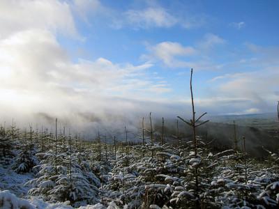 The wintery scene of walk 101 of PMG!